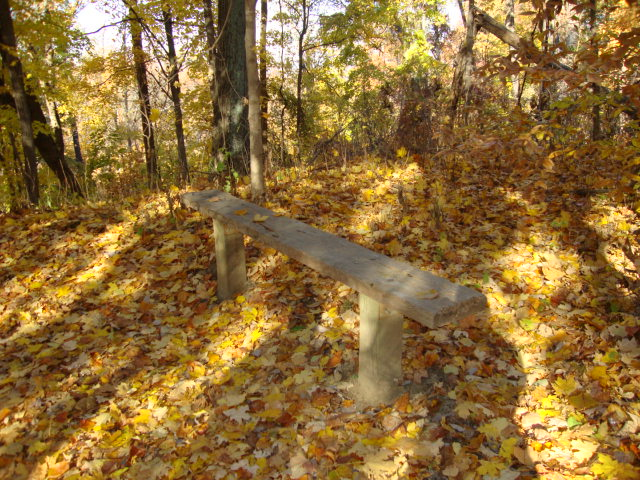 Post for tying horses with yellow leaves on the ground and trees.