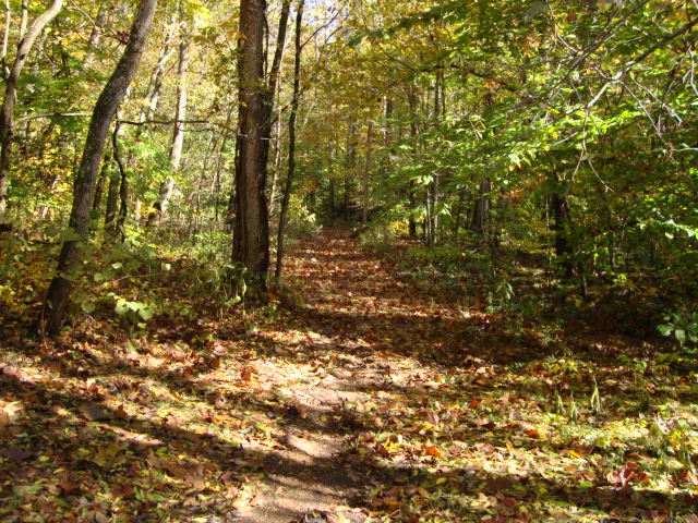 Trail with brown leaves on ground.  Green trees on both sides of trail.
