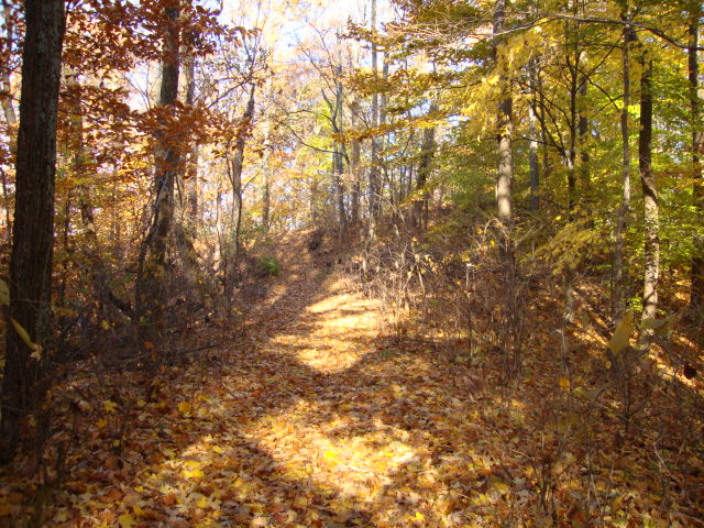 Trail with sun shining and trees.