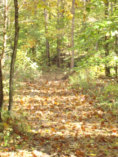 Trail with leaves on ground. Green foliage on both sides of trail.